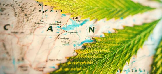 Which Countries Smoke The Most Weed?