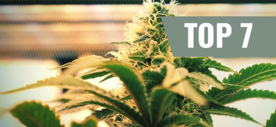 Top 7 Lighting Factors For Growing Marijuana