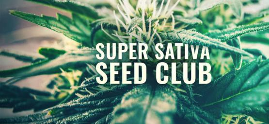Super Sativa Seed Club Is Back!