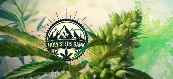 Zamnesia Presents: Holy Seeds Bank Pollen