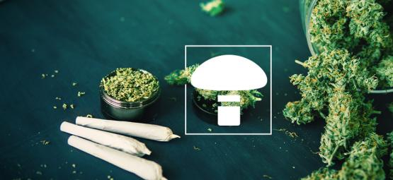 Is It Okay To Mix Weed And Magic Mushrooms?