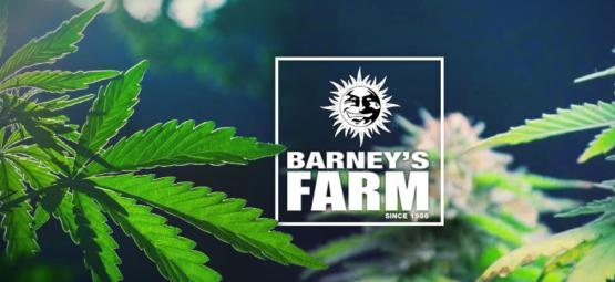 The Best Cannabis Strains By Barney's Farm