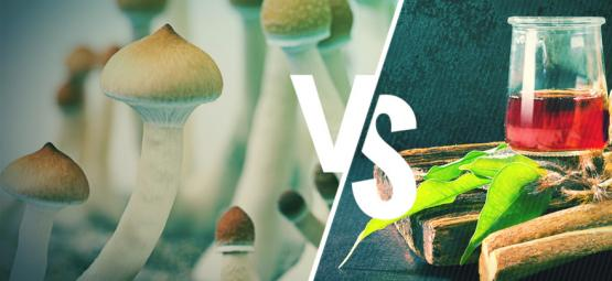 Ayahuasca vs Magic Mushrooms: What's the Difference?