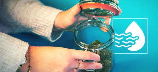 Burping Your Nugs When Curing Cannabis