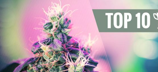 Top 10 Award-Winning Cannabis Strains