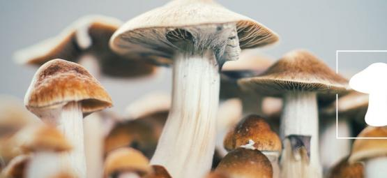 How To Grow Magic Mushrooms Indoors