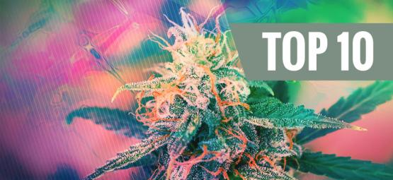 Top 10 Psychedelic Cannabis Strains