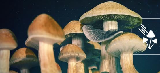 How Much Light Do Magic Mushrooms Need To Grow?