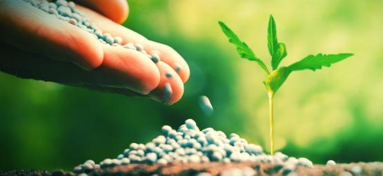 What Are The Best Cannabis Fertilisers?
