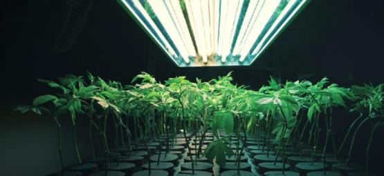 What Is An Inert Growing Medium In Cannabis Cultivation
