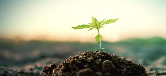 How To Make Your Own Compost For Growing Cannabis