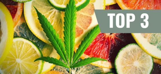 Top 3 Cannabis Strains By Terpenes