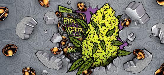 Zamnesia x Ripper Seeds: Amnesia Punch (Limited Edition)