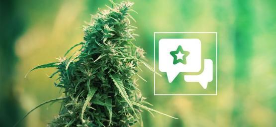 Sour Diesel: Cannabis Strain Review & Information