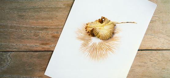 How To Take Mushroom Spore Prints
