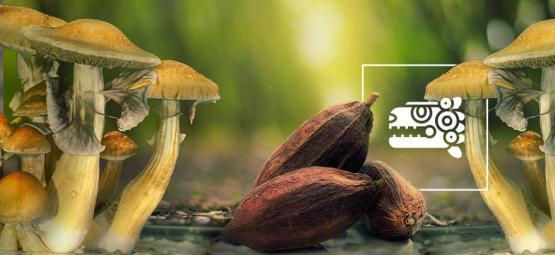 The Aztec Combo: Magic Mushrooms & Cacao