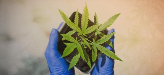 Top 10 Reasons To Grow Your Own Weed
