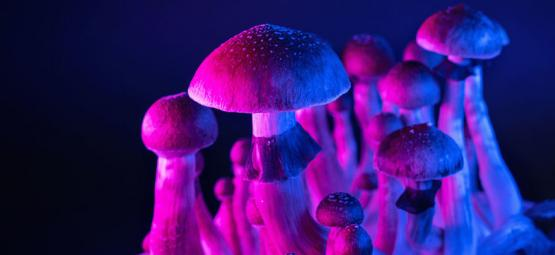Magic Mushrooms And The Hyper-Connected Brain