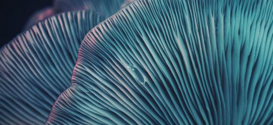 How To Prepare For A Safe Psychedelic Trip?