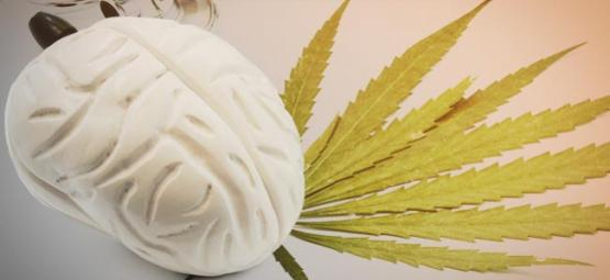 What Cannabis Does To Your Brain