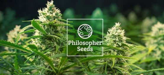 5 Tips: How To Grow Autoflowering Seeds By Philosopher Seeds