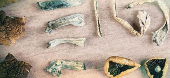 How Many Types Of Magic Mushrooms Exist?
