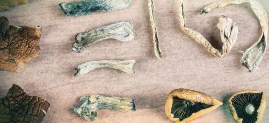 How Many Types Of Magic Mushrooms Exist?