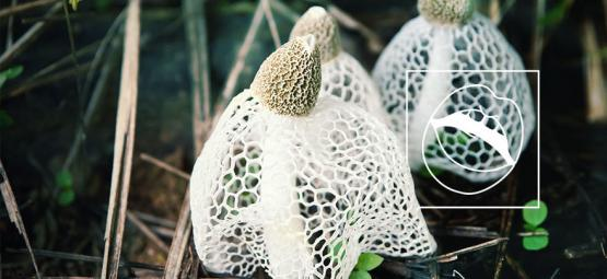 Rare Mushroom Thought To Induce Instantaneous Orgasms