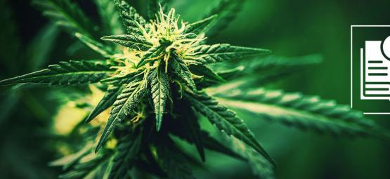An introduction to hemp