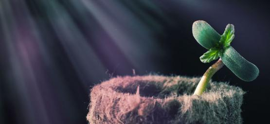 Grow Tip: Understanding The Light Spectrum