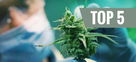 Top 5 High-CBD Cannabis Strains 2019