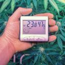 Le Temperature Ottimali per Coltivare Cannabis