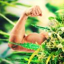 Top 10 Strongest And Most Potent Cannabis Strains
