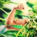 Top 5 Strongest And Most Potent Cannabis Strains