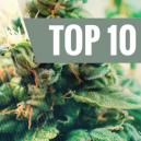 Top 10 Autoflowering Cannabis Strains