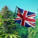 The Best Outdoor Cannabis Strains To Grow In The UK