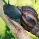 Cannabis Pests: Dealing With Slugs and Snails