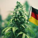 The Best Outdoor Cannabis Strains To Grow In Germany