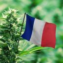 Best Cannabis Strains To Grow Outdoors In France