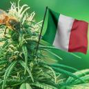 The Best Outdoor Cannabis Strains To Grow In Italy for 2017