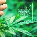 Difficult To Grow, Highly Rewarding Cannabis Strains