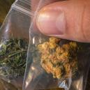 The Different Colours Of Cannabis And What They All Mean
