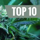Top 10 Cannabis Sorten