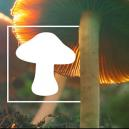 How To Identify Different Types Of Magic Mushrooms
