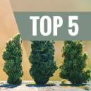 Top 5 High Yielding Autoflowering Strains