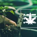 How To Grow Your First Cannabis Plant In 10 Steps