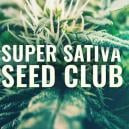 Super Sativa Seed Club È Tornata!