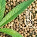 The Best Cannabis Seeds For Outdoor Cultivation Per Climate