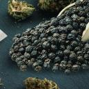 Does Black Pepper Relieve Cannabis-Induced Anxiety?