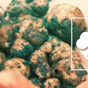 How to Grow Your Own Magic Truffles